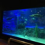 Photo of SEA LIFE Busan Aquarium