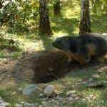 Photo of Parc Animalier Des Pyrenees