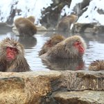 Photo of Jigokudani Snow Monkey Park