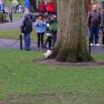 Albino Squirrel in Public Garden