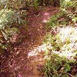 Photo of Tijuca National Park