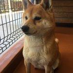 Photo of Sekai No Meiken Bokujo Dog Cafe