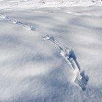 Tracks Near Creamer's Field Trail 3/20/2014