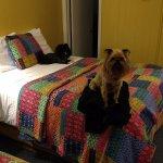 Photo de Starlite Motel