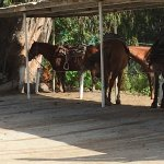 Foto de Sea Horse Ranch - Private Rides