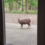 A visitor who came to see us daily