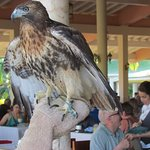 Photo of Blau Costa Verde Beach Resort