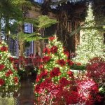 Inside the Conservatory at Christmas