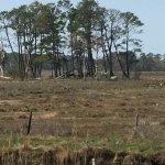 Photo de Chincoteague National Wildlife Refuge