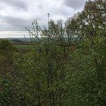 The amazing woodlands