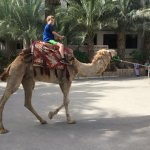 Take a camel ride in between some of the attractions on the West Bank tour!