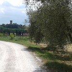 Photo of Agriturismo Il Frantoio Di Vicopisano