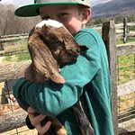 Lots of baby goats just born!