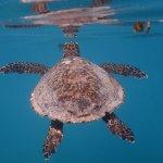 Photo of Raffles Seychelles