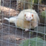 Upper Clements Wildlife Park