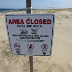 Parts of the dunes are roped off to protect nesting birds.