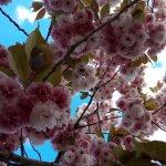 Les arbres en fleurs au camping le moulinal.