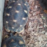 Two Turtles Kissing At Riverbanks Zoo & Garden