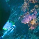 Extended Horizons dive leader Noe highlights Damselfish eggs.