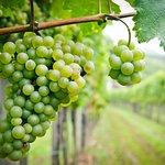 Grape and Wine Niagara Touring Center