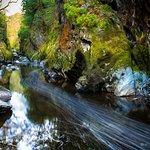 Fairy Glen Gorge, April 2017. #wales #adamtas #photographer #adamtasimages #fairyglen