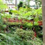 Jardin tropical Japonais