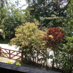 View of road from lovely balcony. The ocean is right behind those trees!