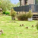 Chichester Lakeside Holiday Park - Park Holidays UK