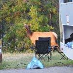 wapiti campground3