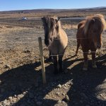 Foto de Gateway to Iceland