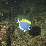 Photo of Oceanic Divecenter