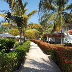Foto de Mayan Princess Beach & Dive Resort