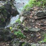 Hot Springs warm water