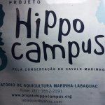 Photo of Projeto Hippocampus