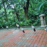 Even birds can queue.