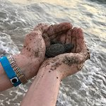 Baby turtle release.
