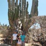 Uno de los cactus mas vienos de la region