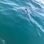 Photo de Akaroa Dolphins