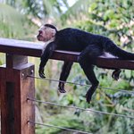 The porch of #304 overlooks the Pacific and is a favorite spot for the monkeys.