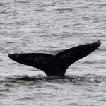 We were able to see and photograph about five different whales on the trip.