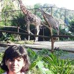 Singapore Zoo Foto
