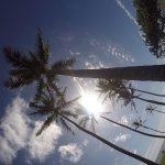 Foto de Oahu Spot Tours
