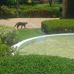 one of the hotel cats