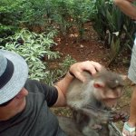 Monkey rescue