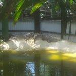 A Croc.