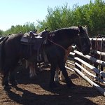 Foto de Yellowstone Horses - Eagle Ridge Ranch