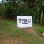 Photo de Elephant Corridor Hotel