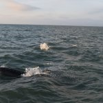 The dolphins were in abundance and put on a show for us!