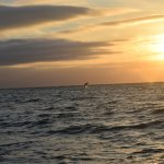I got a great photo of a dolphin with the setting sun in the background!