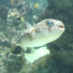 Aquarium Mare Nostrum Foto